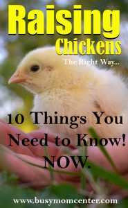 Raising Chickens – 10 Things You Need to Know