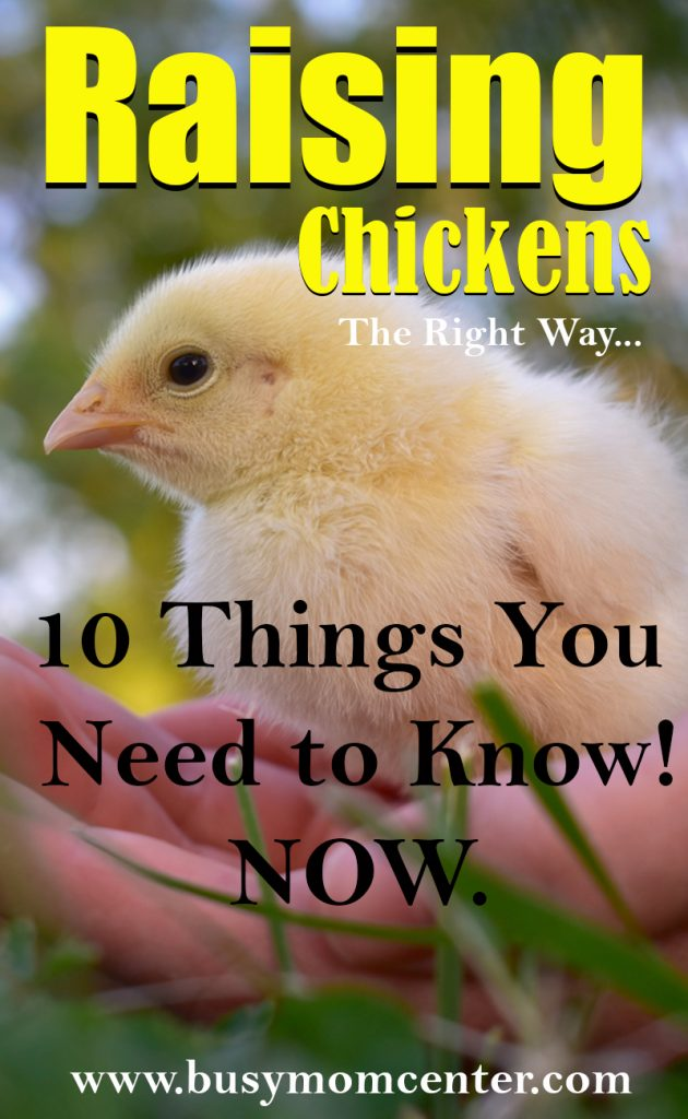 Raising Chickens - 10 Things you need to know