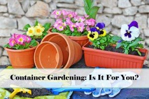 Container Gardening – Is It For You?