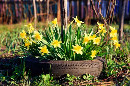 Container Gardening- Tire