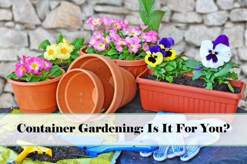 Container Gardening - Is It For You?