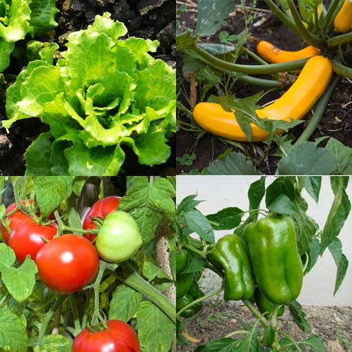 Container Gardening Growing Vegetables in a Container