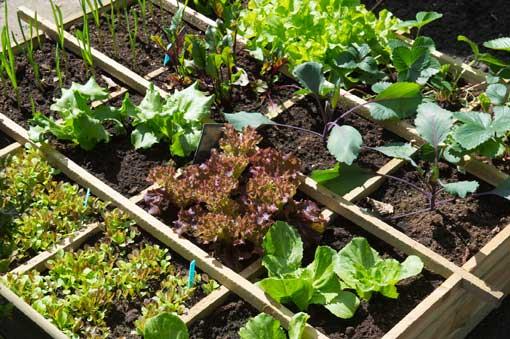 Understanding Container Gardening
