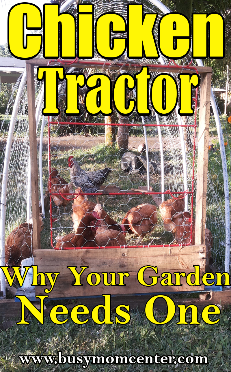 Chicken Tractor - Why Your Garden Needs One