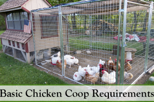 Basic Chicken Coop Requirements