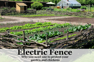 Why an Electric Fence To Protect